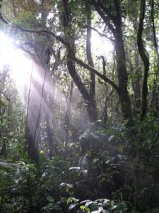 costaricaf